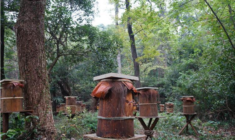 濒临灭绝婺源深山木桶土蜂蜜 农家自产自销纯天然正宗图片